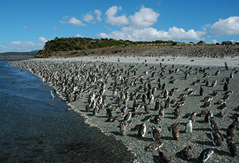 Lobos_-_Pajaros_-_Pinguinera_1132